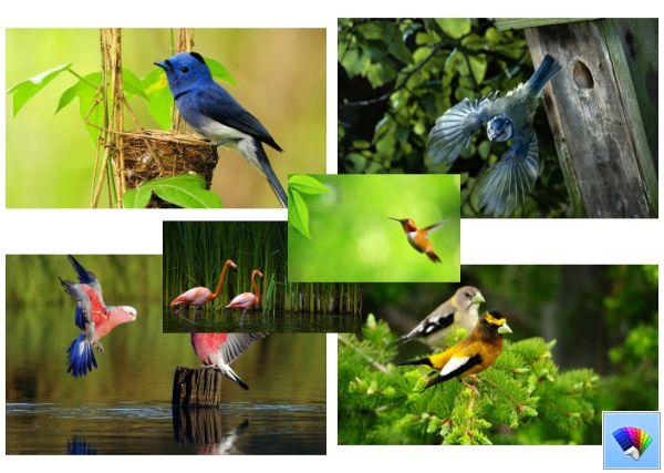Wild Birds theme for Windows 8